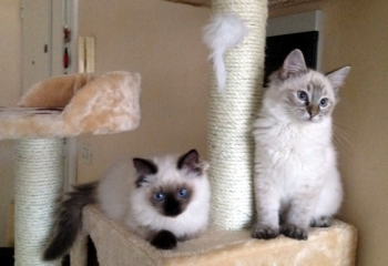 Silmarilions Penelope & Nausicaa by Concetta Piano